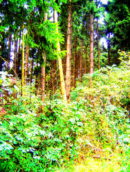 Forest by Felizias