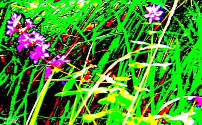 Flowers by Felizias