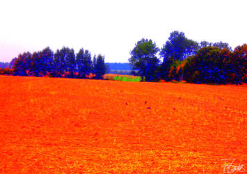 Raves on a field by Felizias