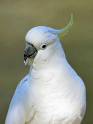 Portrait Of A Wild Bird