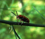 worm - a bug, that is by fiamen