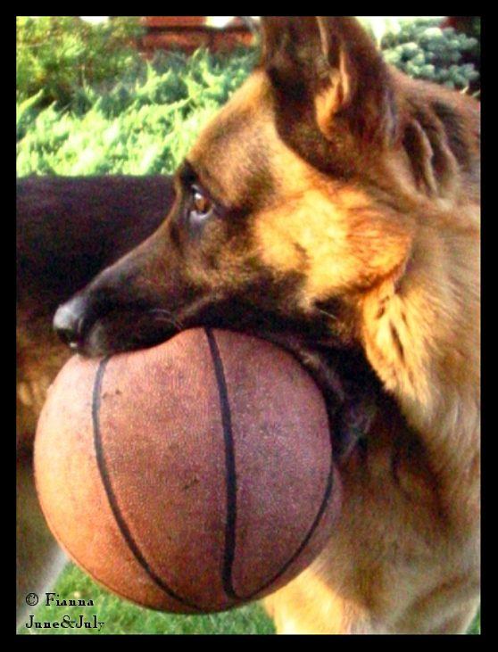 The basketballer by fiamen