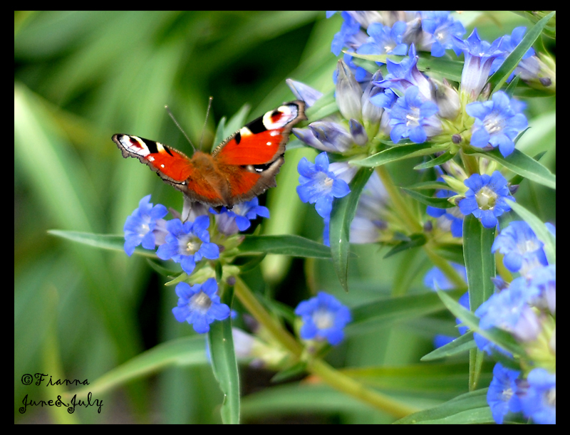A butterfly by fiamen