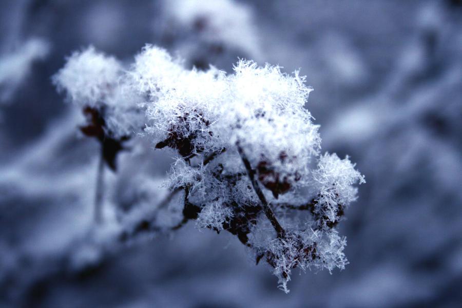 Winter Flowering Plants Winter Flower by Eevelynn
