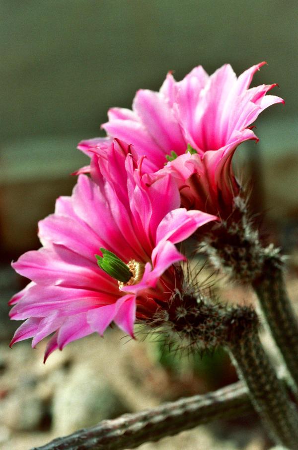 cactus_2 by tobiasz85