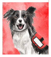 Watercolor Border Collie by acarlizeynep