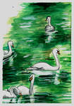 Watercolor Swans by acarlizeynep