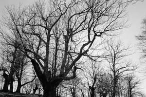 Haunted forest 2 by ghostdog276