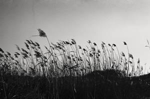 Blows the wind by ghostdog276