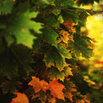 autumn by kseshka