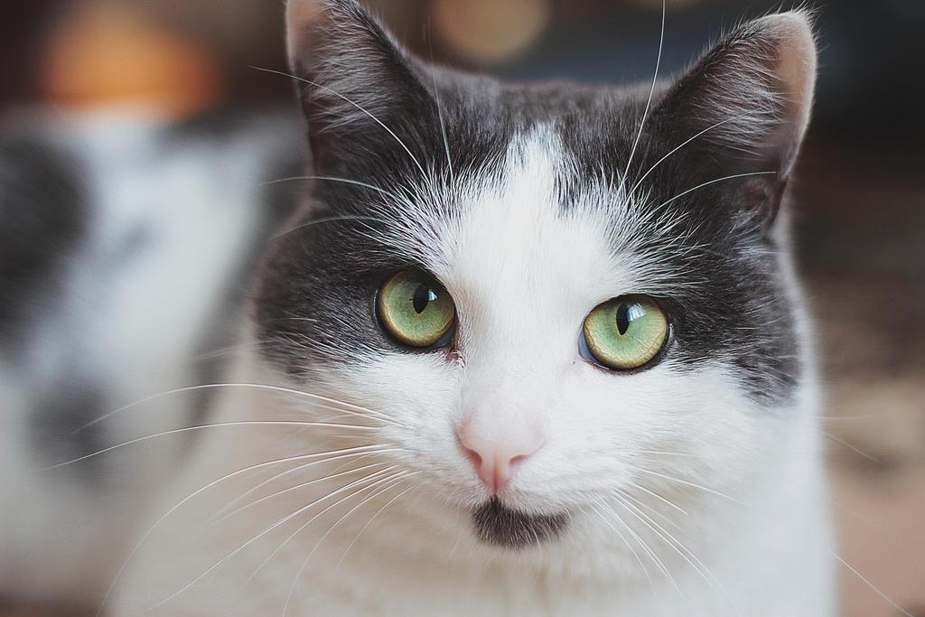 cat by kseshka