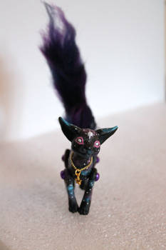 Star Cat 1