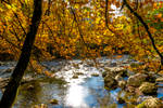 Notes d'automne by JCPicture
