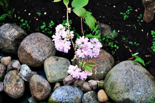 Sweet flowers #1.