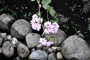 Sweet flowers #2.