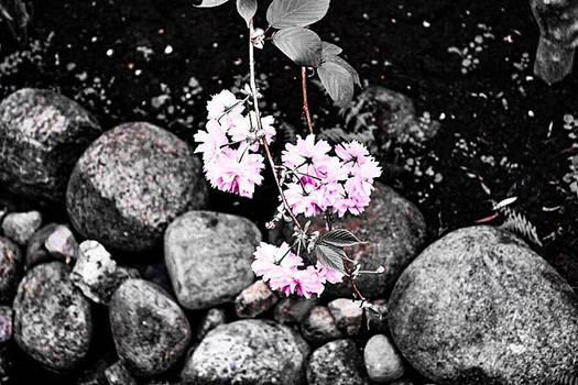 Sweet flowers #3.