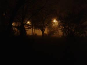 Trees night