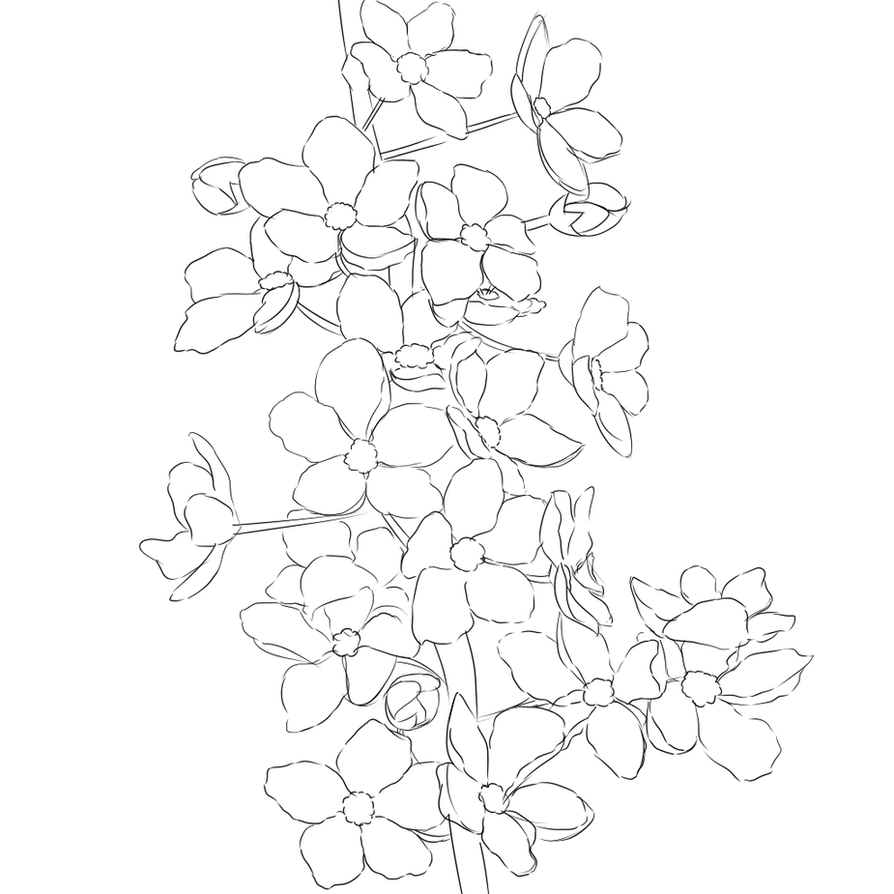 Flower Tree Line Drawing : Cherry blossom line art by silly midnight on deviantart