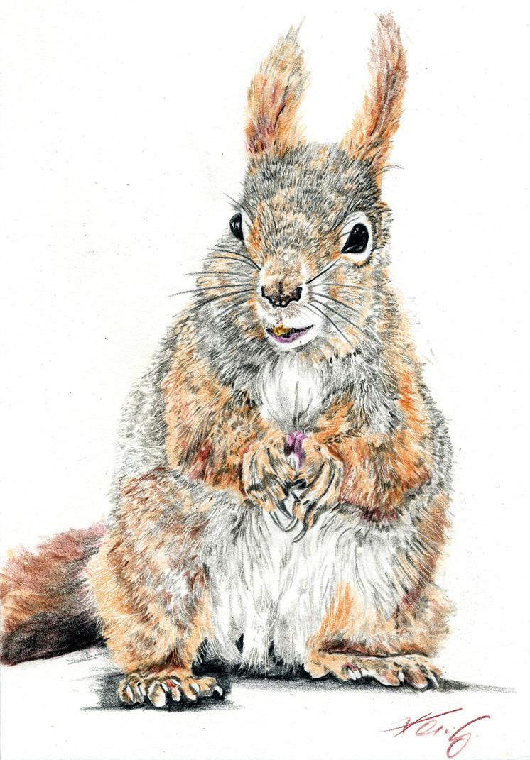 Squirrel by tempelziege