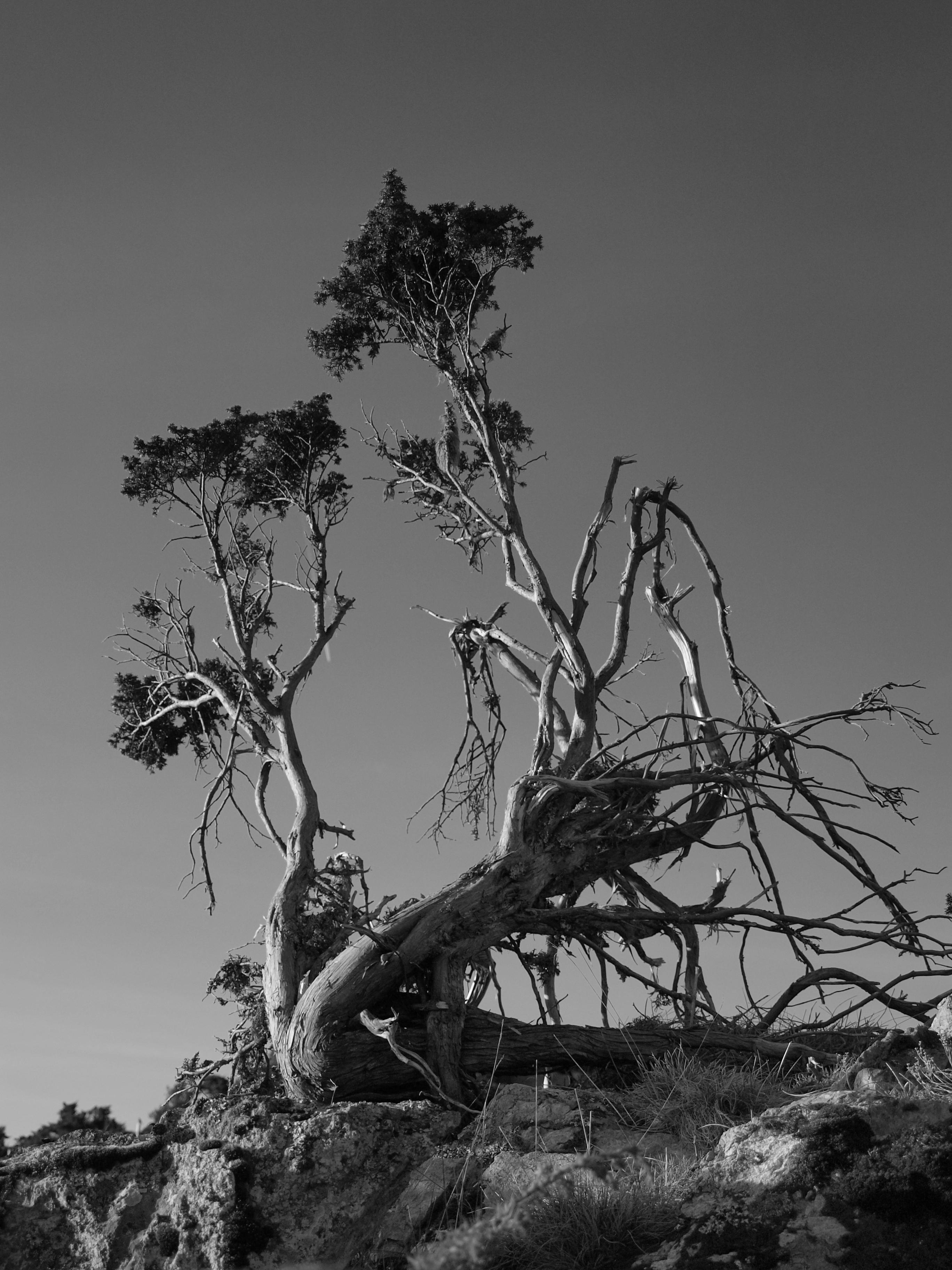 Les vieilles branches by Pixelmenteur