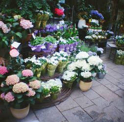 Wien in Diana Mini: Blumen by neuroplasticcreative