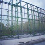 Wien in Diana Mini: Nature's Crimes by neuroplasticcreative