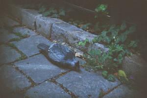 Wien in Holga 135BC: Carved Pigeon