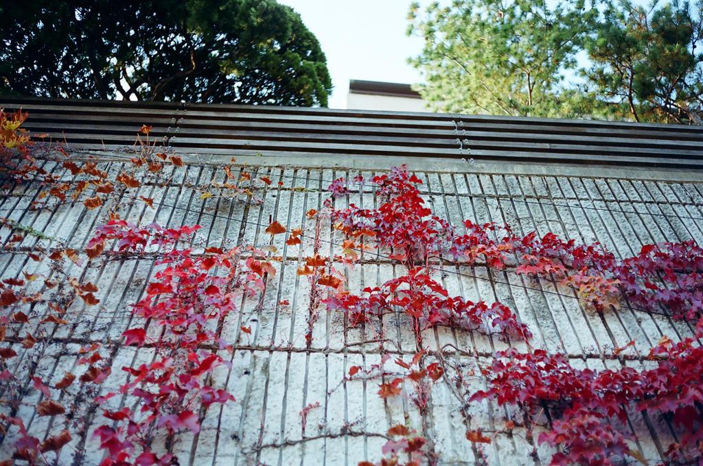 Jongno Days: Climb, Love