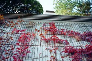 Jongno Days: Climb, Love by neuroplasticcreative