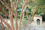 Changdeokgung Palace: Secrets by neuroplasticcreative