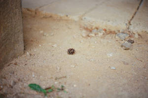 Changdeokgung Palace: Pinecone Shortcut by neuroplasticcreative
