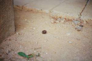 Changdeokgung Palace: Pinecone Shortcut by neuroplasticcreative