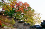 Changdeokgung Palace: Trees I