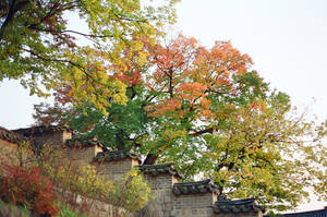 Changdeokgung Palace: Trees II by neuroplasticcreative