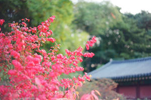 Changdeokgung Palace: Nature Observed II by neuroplasticcreative