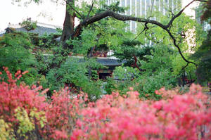Changdeokgung Palace: Nature Observed IV by neuroplasticcreative