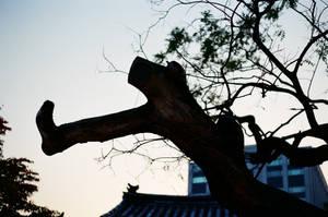 Changdeokgung Palace: Struck by Lightning by neuroplasticcreative