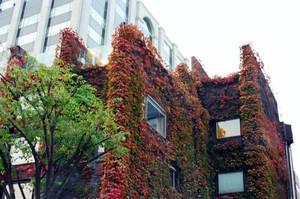 Jongno Days: Ivy by neuroplasticcreative