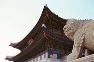 Gyeongbokgung Palace: Protector I by neuroplasticcreative