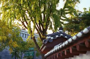 The Nature of Seoul I by neuroplasticcreative