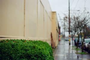 Alberta in the Rain I by neuroplasticcreative