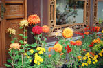 Lan Su: Chrysanthemum World