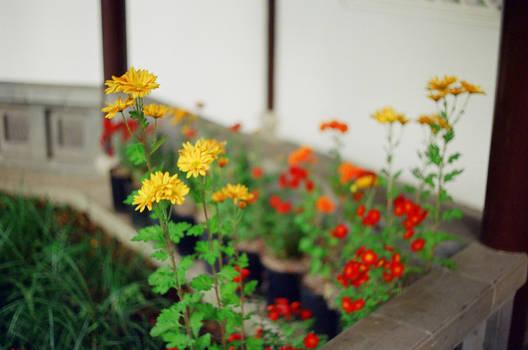 Lan Su: Small Flower by neuroplasticcreative