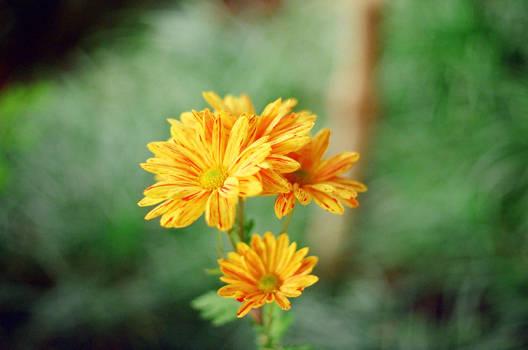 Lan Su: In my dream, there was a flower... by neuroplasticcreative