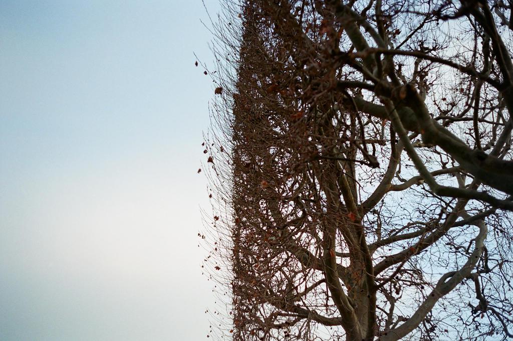 Paris: Arbres de la Mort, II by neuroplasticcreative