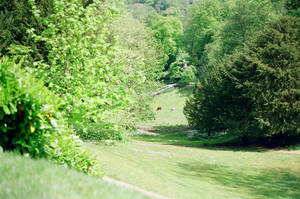 Prior Park Landscape Garden: Down The Hill by neuroplasticcreative