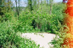 Prior Park Landscape Garden: Seclude