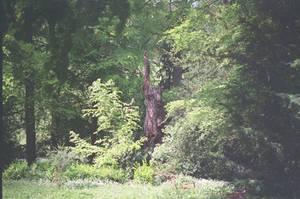 Prior Park Landscape Garden: I Stand Tall by neuroplasticcreative