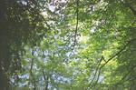 Prior Park Landscape Garden: Forest Dream