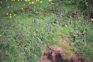 Prior Park Landscape Garden: Flowers, I by neuroplasticcreative